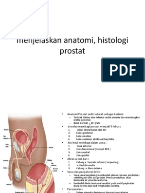 prostatis ami így van