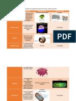 Cuadro Comparativo de Organelos de Célula Eucariota y Célula Procariota