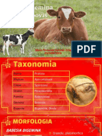 Babesia bigemina y bovis