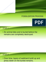 Fossilization Process