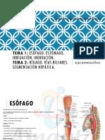 Amauta - Anatomía - Damián - Esófago, Estómago, Hígado y Vías Biliares