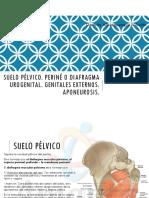 Amauta - Anatomía - Damián - Perine, Genitales Externos