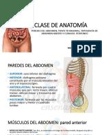Amauta - Anatomía - Mariel - Semana 19