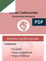 Amauta - Histología - Sistema Cardiovascular - Betiana