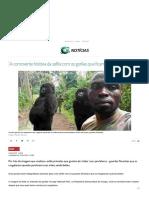 A Comovente História Da Selfie Com Os Gorilas Que Ficam de Pé