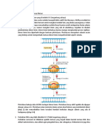 Mekanisme Perbaikan DNA Pasca Mutasi-1.docx