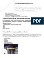 Evaluacion Reproductiva en Machos Bovinos