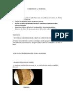 FENOMENOS DE LA MEMBRANA YEIMIS.docx