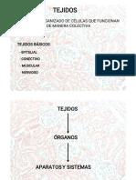 EPITELIAL(1).pdf