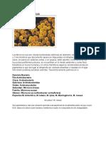 micrococcus.pdf