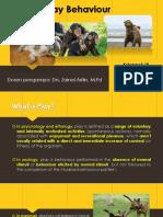 Animal Play Behaviour