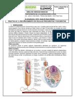 Guia_2_Fecha_a_desarrollar_la_practica_A (1).pdf