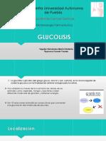 GLUCOLISIS.pptx