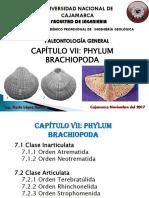 Cap Vii_phylum Brachiopoda