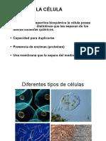 cel1.pdf