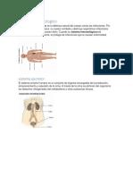 sistema inmunologico.docx