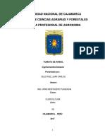 olericultura - berenjena andina.docx