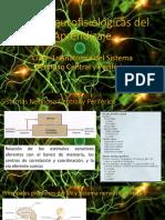 Neuroanatomia Clinica Snell 7ed