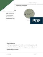 Anemona Incompleto - Copia