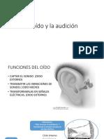 El Oído y La Audición Tercero