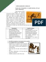 ESPECIALIDAD DE CAMELLOS.pdf