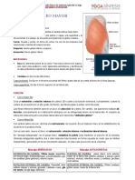 4.-GLUTEO-MAYOR.pdf