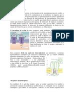 270975773-Receptores-ionotropicos.docx