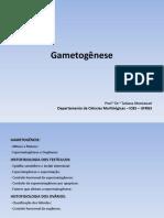 gametog(1)