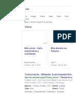Mirlo - Google Search