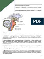 Guía 2 Sistema Nervioso 2 Medio