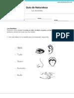 prueba de los sentidos primero.docx
