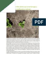Científicos desarrollan plantas que conservan agua y toleran la sequía modificando un solo gen.docx
