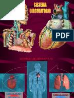 Sistema Circulatorio