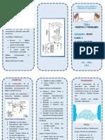 TRIPTICO LA fonetica y fonologia.docx