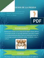 HUESO DE LA PIERNA . LEONARDO.pptx