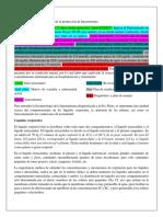 Resumen RAE 1 Mecanismos de producción hiponatremia-2.docx