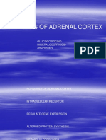 Adrenal Hormone