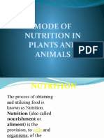 Mode of Nutrition in Plants and Animals