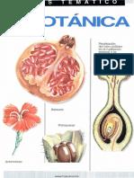 Ciencia - Atlas Tematico de Botanica.pdf