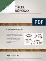 Animales Artrópodo