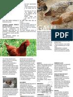Díptico[1] de produccion de aves traspatio