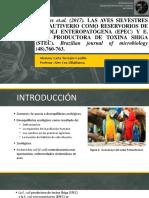 E.COLI Y DIARRE.pptx
