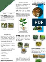 289155876-Triptico-Reino-Plantae-1.pdf