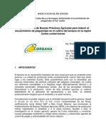 Plan de Aplicacion CORBANA Fase II Web