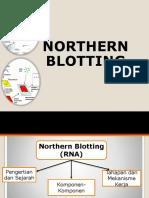 8. Northen Blotting
