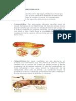 EXCRECIÓN EN INVERTEBRADOS.docx