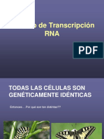 11 -Transcripción y Procesamiento
