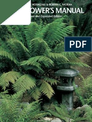 Adiantum Fragrans fern house plant in 12//13cm pot Maidenhair fern Free Delivery