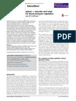 AT1 Angiotensin receptors — vascular and renal