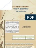Ciclo Del Carbono Cx